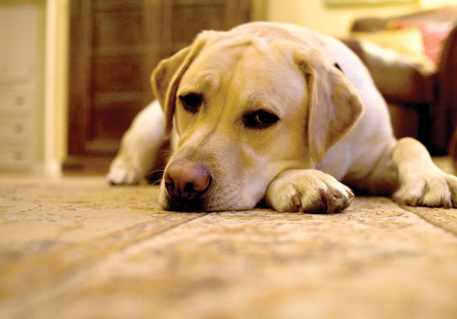 texto: Agência NoAr | fonte: Pet Booking | foto: divulgação